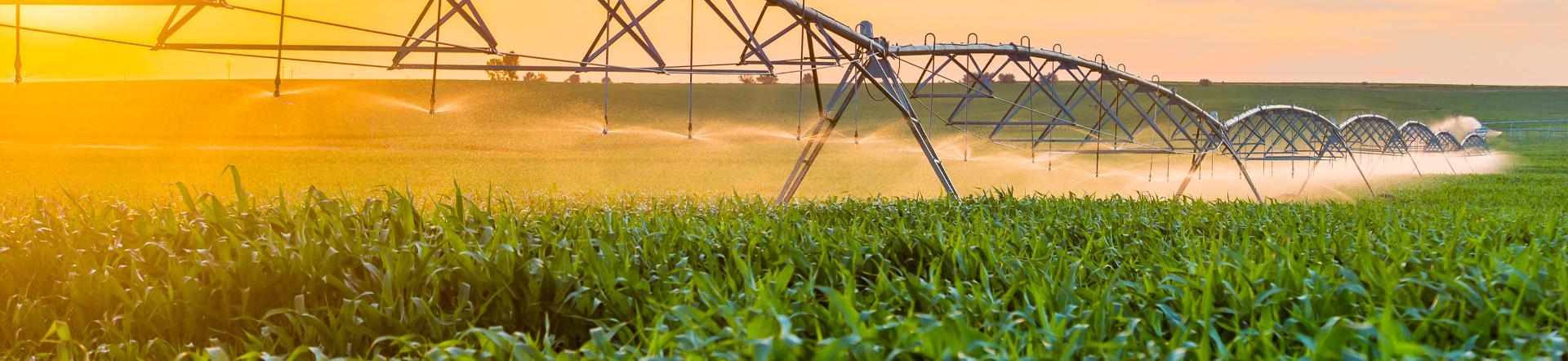 western nutrients sprinklers in a field
