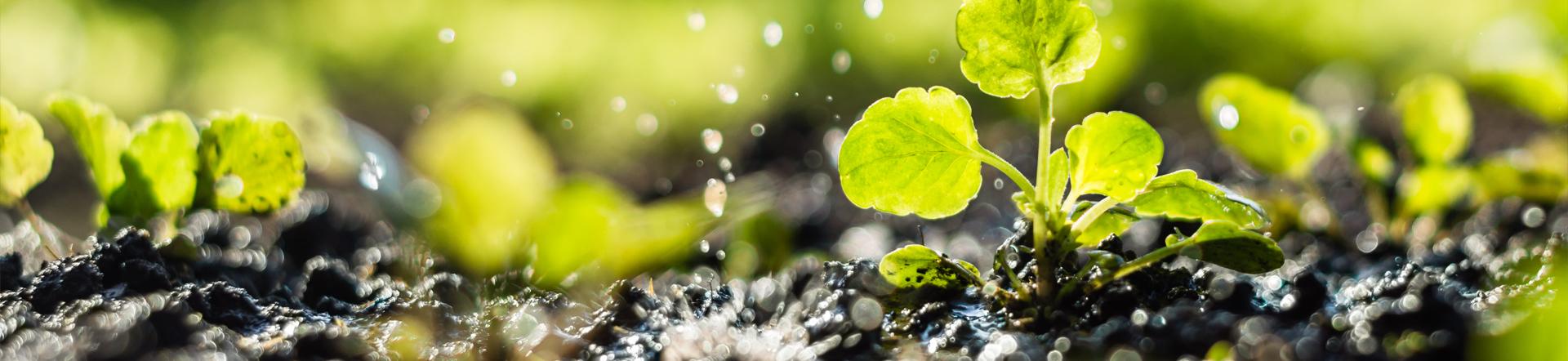 macro shot of plants being watered